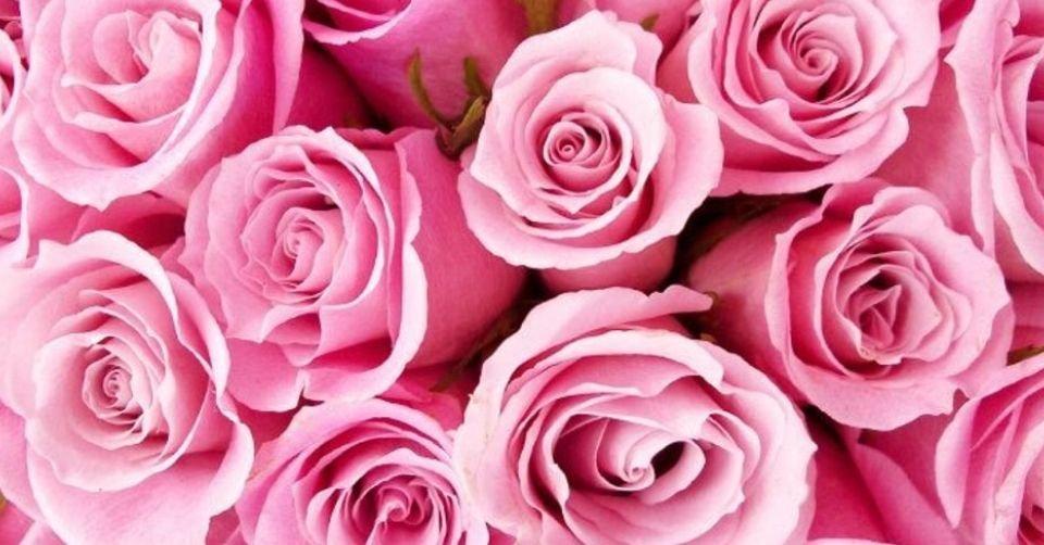 الورود الزهرية اللون